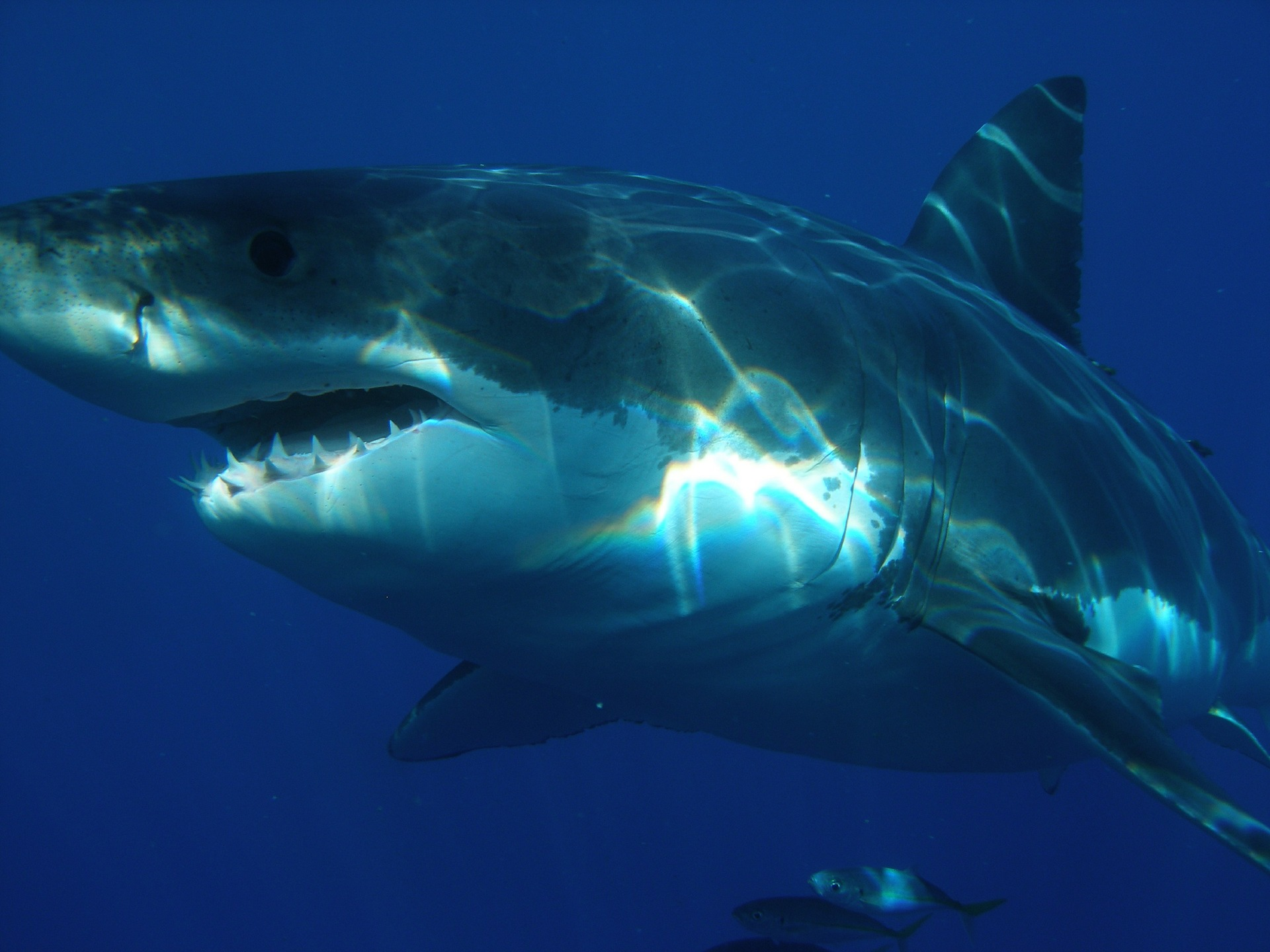 sharks are friends not food u2013 crystal cove conservancy