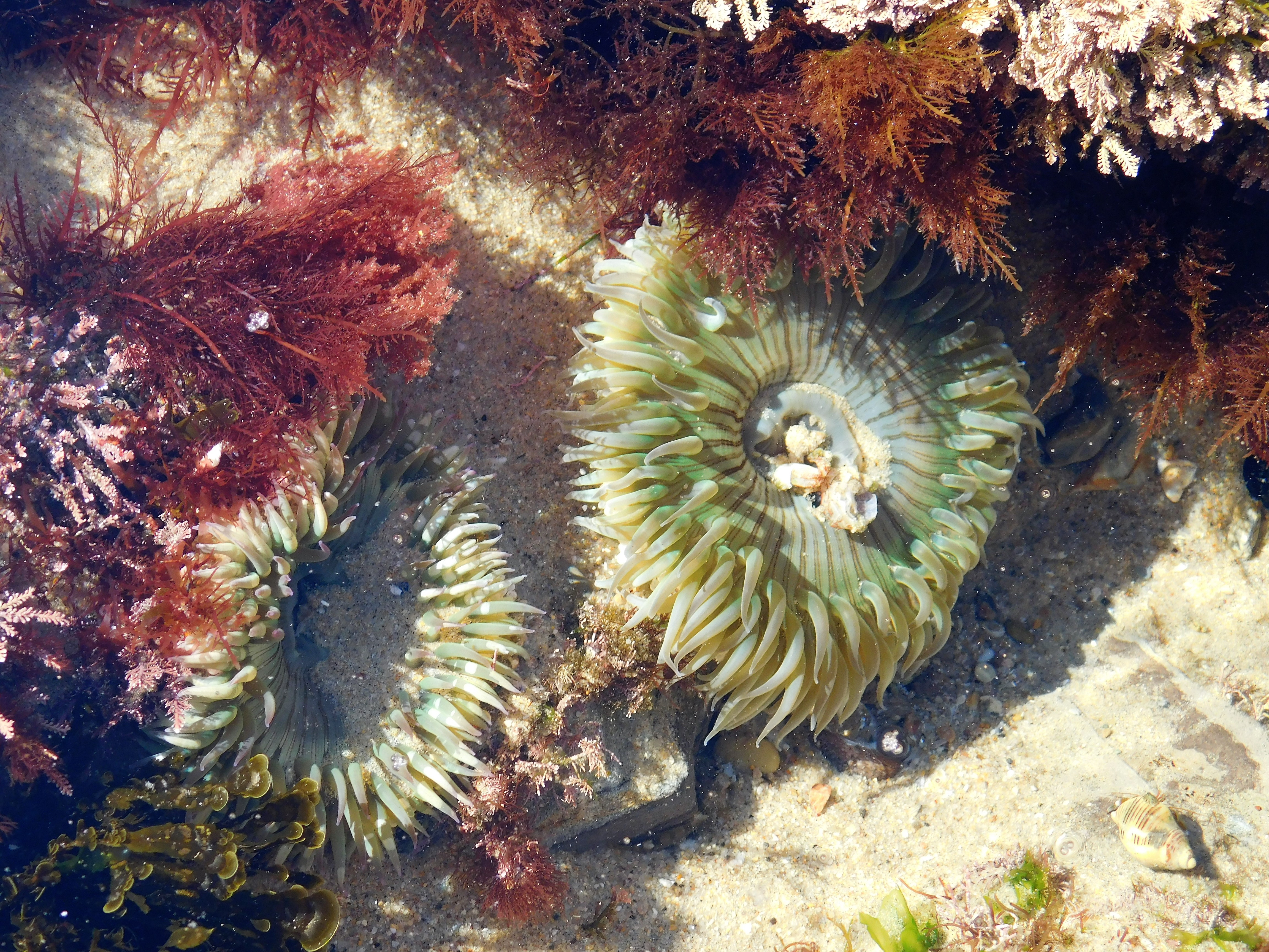 Tidepool walk crystal cove conservancy nvjuhfo Image collections