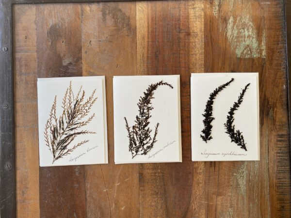 A photo of notecards with pressed seaweed on them